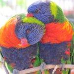 Bird enclosure is very colorful