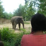 Elephant exhibit