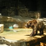 Open bear exhibit