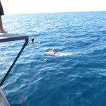 Swim to cool down!