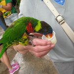 Feeding the parakeets...