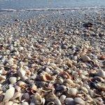 Crazy amount of shells!