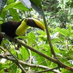 TUCAN ON THE AERIAL TRAM TOUR IN THE AFTERNOON