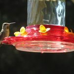 hummingbird <3