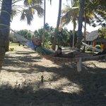 Hamac derriere le ''beach bar'' ahwww