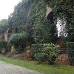 древняя стена в зелени