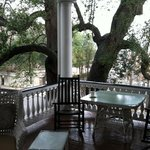 Nestled among live oaks