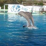 L'entraînement des dauphins