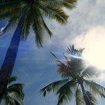 Beutiful Palm trees