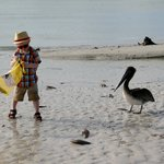 The pelican was helping him look for shells :-)