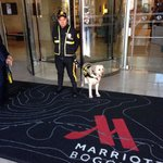Security dog and staff front the Marriott Bogota