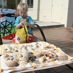 Sorting through the shells we collected