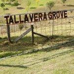 Tallavera Grove