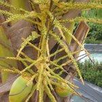 Native fruit tree