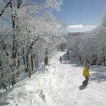Skiing after fresh snow fall