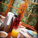 cafe da manhã com vista para natureza