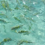 Crystal clear ocean with fish!