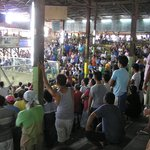 Cock-pit  Arena, Cockfight