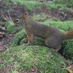 Asticou Azalea Garden - Squirrel