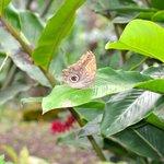 Big & beautiful butterflies