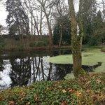 后花园,池水、老树,还时不时有野鸭子在这里游曳。安静