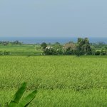 View across rice fields to ocean