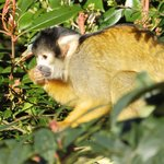 Squirrel Monkey, one of the best exhibits