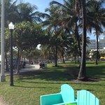 Love the big palm trees