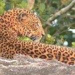 view in the safari