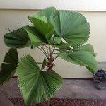 fin plante