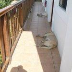 Lazy companions
