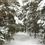 Beautiful snow covered trails for cross country skiing and snowshoeing