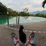 Кот у бассейна