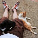 Дружелюбные местные коты