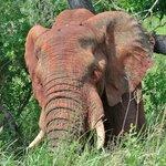 elephant eye lashes