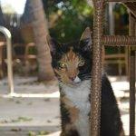 Resident Cat