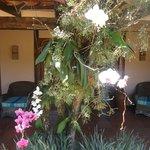Orquídeas próximas à recepção.