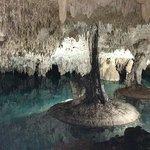 Pet Cemetery Cenote