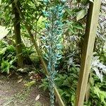 The Jade Vine