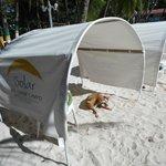 Perros callejeros y basura en la playa privada
