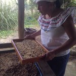The coffee farm tour next to Corredores del Pacuare.