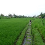 Take a stroll into the rice fields