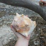 Huge shell!