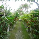 Hotel Exterior and Lush Garden