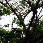 В Басаге живет на дереве белка
