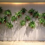 I want to have this wall of plants