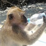 encounter with a monkey in small monkey island
