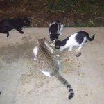 Die hungrigen Hotelkatzen. Bitte füttern.