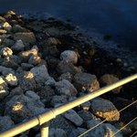 Strand remsan till havet, inte speciellt inbjudande.....