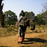 elephant ride at spice plantation